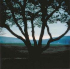Bernheim Arboretum, Clermont, KY, 1993