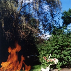 Fire and Flowers, 2004, 20 x 24 inch Chromogenic Print, Signature verso, Edition of 10