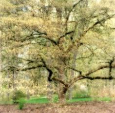 """Bernheim Arboretum, Kentucky, 2008""  [4-08-15c-4], 19 x 19 inch / 28 x 28 inch Chromogenic Print; Edition of 15 / 38 x 38 inch Chromogenic Print; Edition of 6"