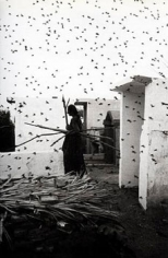 Cementario, Juchitan, Oaxaca, 1988, Gelatin Silver Print, Signed, titled & dated on verso, size variable