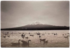 Masao Yamamoto, Untitled #1228, from the series Nakazora. 4.25 x 6.25 inch Gelatin Silver print. Edition of 40.