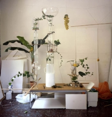 Gonzalo Puch, Grapes and Crystal Still Life, 2003, 51 x 49 inch Chromogenic print, Signed, titled, dated and editioned on verso, Edition of 5