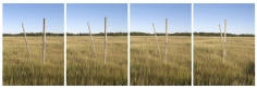 Walking Sticks, four panels, 25 x 19 inch each, chromogenic print
