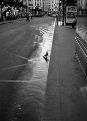 "Mark Steinmetz, ""Pigeon, Place de Clichy, Paris,"" 2011, Gelatin Silver print, 20 x 16 inches, Edition of 9"
