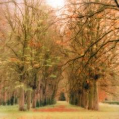 """""""Parc de Sceaux, France, 2008""""  [10-08-17c-11], 19 x 19 inch / 28 x 28 inch Chromogenic Print; Edition of 15 / 38 x 38 inch Chromogenic Print; Edition of 6"""