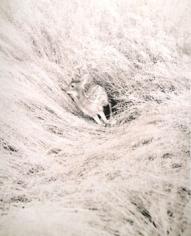 """Deer #1"", 2008, 17 x 14 inch Chromogenic Print, Edition of 7, 40 x 30 inch Chromogenic Print, Edition of 3"