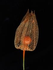 Flowers #4, Untitled (Lampi),2009, 9x 7 inch chromogenic print