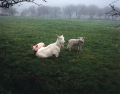 Jem Southham, The Pig, the Lamb, and the Goat, 1990/2006, 16 x 20 inch Chromogenic print, Signed, titled, dated and editioned on verso, Edition of 12