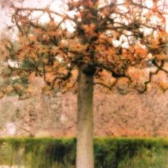 """""""Parc de Sceaux, France, 2008"""" [10-08-26c-7], 19 x 19 inch / 28 x 28 inch Chromogenic Print; Edition of 15 / 38 x 38 inch Chromogenic Print; Edition of 6"""