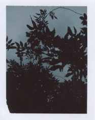 """wysteria,"" from the series ""The Sun Room: Interchanges, B-sides & Remixes,"" 2008- ongoing, Polaroid, 4.25 x 3.5 inches, unique print"