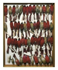 Terry Evans, Field Museum, Drawer of Cardinals, 2001, 24 x 20 inch Iris Print, Signed, titled, dated and editioned on verso, Edition of 15