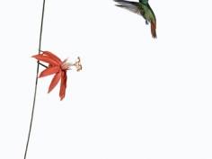 """Sanna Kannisto, """"Act of Flying #23,"""" 2006, 16 1/2 x 22 inches, Edition of 7"""