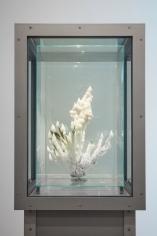 Julian Charriere Sean Kelly Gallery