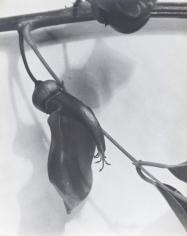 Anatole Saderman Untitled, 1934