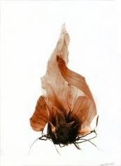 La peau et les racines de l'oignon (Onion skin and roots),2002