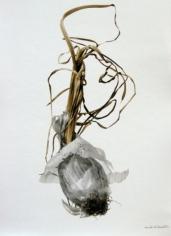 Oignon (Onion), 2002