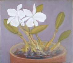 White Orchids 2005