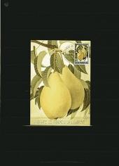 Achterdijk. 1966. Pears of Achterdijk (Fondante de Charneu of Legipont).