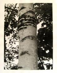 Birch I 1992