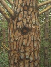 Bark III 1997
