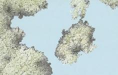 Florent Morellet Lichenstein #2