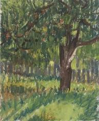 Apple Tree 2007