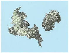 Florent Morellet Lichenstein #5 (2 Islands #2)