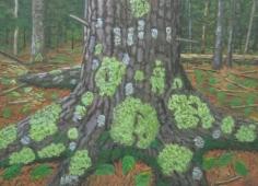 Lichen Tree 1996