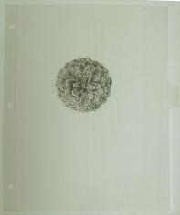 COLTER JACOBSEN Cone Cataract III
