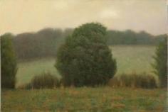 Maple View Tree #2