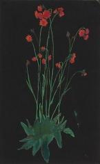 Elizabeth Bishop Red Flowers on Black