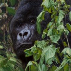 Virunga, 2014