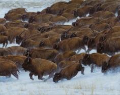 Buffalo Run, 2014