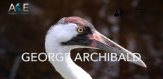 Banovich Wildscapes Foundation 2018 ACE Award for Conservation Excellence Nominee-George Archibald, PhD