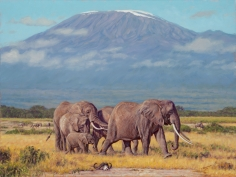 The Plains of Kilimanjaro, 2014