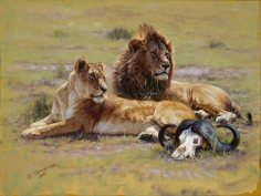 Lions in the Mara, 2015