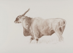 Giant Eland Sketch, 2007