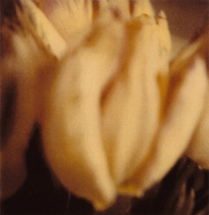 Twombly, Tulip 1