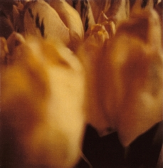 Twombly, Tulip 4