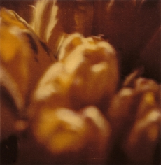 Twombly, Tulip 8