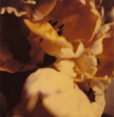 Twombly, Tulip 2