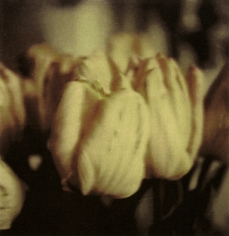Twombly, Tulip 3