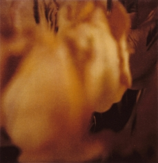 Twombly, Tulip 5