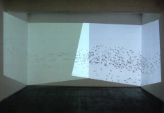 Untitled (birds), 2006, single-channel video, color, silent, 11 min. 13 sec., dimensions variable, edition of 5