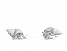 Adonna Khare (b. 1980) Hermit Crab Clothesline, 2016