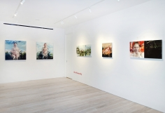 In Focus: Alex Kanevsky - Installation view