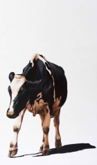 Éloïse Brodeur, Galerie LeRoyer, cow painting, cow paintings