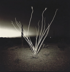 Richard Misrach Ocotillo, Arizona