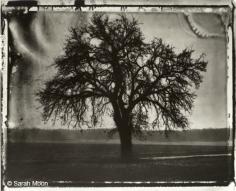 Le Poirier, 1992, 15-3/4 x 19-1/2 Toned Silver Gelatin Photograh, Ed. 20