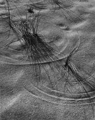 Dune Grass, 20 x 16 Silver Gelatin Photograph